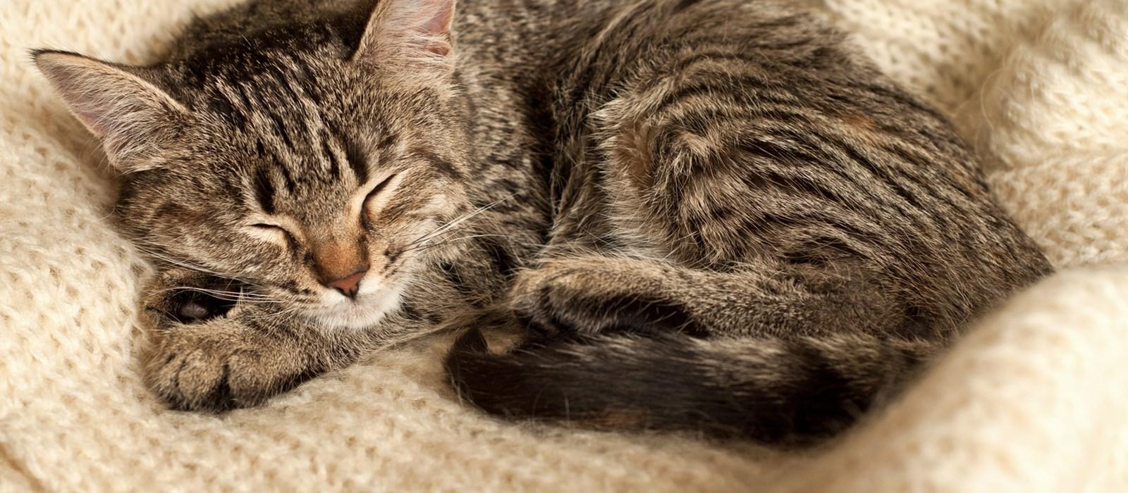 1c679039b6 Hoeveel slaap heeft mijn kitten nodig